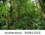 Green Dense Jungle In Costa Rica