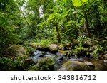a small river in the green... | Shutterstock . vector #343816712