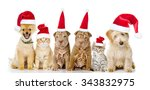 Stock photo group of cats and dogs in red christmas hats isolated on white background 343832975
