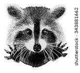 cute raccoon vector requests... | Shutterstock .eps vector #343881662
