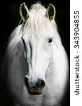 Stock photo portrait of a white horse 343904855
