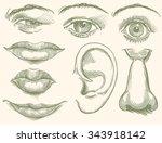 face. design set. hand drawn... | Shutterstock .eps vector #343918142