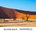 dead acacia trees and red dunes ... | Shutterstock . vector #343949012