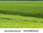 photographed close up green...   Shutterstock . vector #343980362