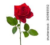Stock photo single beautiful red rose isolated background 343985552
