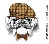 portrait of a bulldog with... | Shutterstock .eps vector #344052632