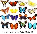 butterflies collection ... | Shutterstock . vector #344276492