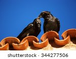 Two Ravens Sitting On An Orang...