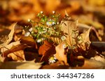 Small photo of Photo closeup of white daisies flowers on autumn yellow golden thick blanket of fallen maple leaves on ground deciduous abscission period on blurred leaf litter background, horizontal picture