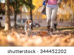 Stock photo girl with her beagle dog jogging in park 344452202
