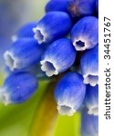 macro detail of a blue  flower - stock photo