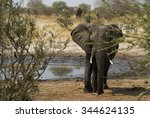 Elephant By A Watering Hole ...