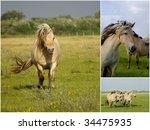 collage of wild horses | Shutterstock . vector #34475935
