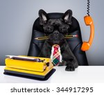 boss french bulldog dog   ... | Shutterstock . vector #344917295
