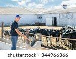 Farmer With Shovel Feed The...