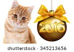 Cat And Christmas Golden Ball ...