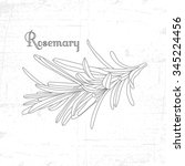 hand drawn rosemary branch with ... | Shutterstock .eps vector #345224456