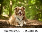 Stock photo happy dog photographed outside in the forest 345238115