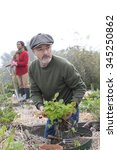 Small photo of Couple busy working in their allotment. The man is in the foreground, planting strawberries.