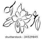 abstract illustration of flower   Shutterstock . vector #34529845