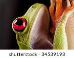frog on branch   Shutterstock . vector #34539193