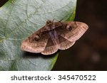 close up of indian owlet moth ... | Shutterstock . vector #345470522