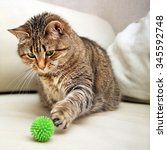 Stock photo playing cat 345592748