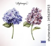 Hydrangea And Leaves ...