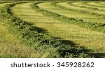 Small photo of A view of a freshly cut alfalfa field to be dried and baled.