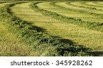 A View Of A Freshly Cut Alfalfa ...