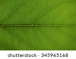 close up of green leaf texture | Shutterstock . vector #345965168