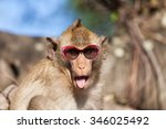 Stock photo funny rhesus monkey with tongue sticking out and sunglasses 346025492