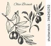 hand drawn olive branch.vector... | Shutterstock .eps vector #346241252
