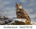 Western Siberian Eagle Owl Bub...
