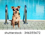 fawn dog wearing red sunglasses ... | Shutterstock . vector #346355672