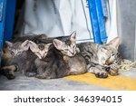 Thai Street Kitten's Laying...