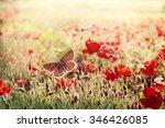 Brown Butterfly In Meadow Of...