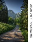 path through forest   hiking... | Shutterstock . vector #346443482