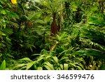 botanic garden  cairns ... | Shutterstock . vector #346599476