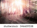 landscape of the way in pine... | Shutterstock . vector #346609538