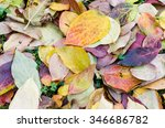Nature Backgrounds   Carpet Of...