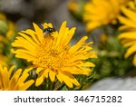 daisy with fly on petals | Shutterstock . vector #346715282