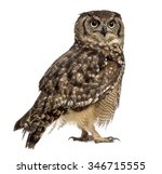 Stock photo spotted eagle owl bubo africanus years old in front of a white background 346715555