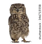 Stock photo spotted eagle owl bubo africanus years old in front of a white background 346715558