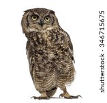 Stock photo spotted eagle owl bubo africanus years old in front of a white background 346715675