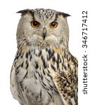 Stock photo close up of a siberian eagle owl bubo bubo years old in front of a white background 346717412
