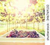 Fresh Grapes On Vineyard Tak ...