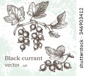 a branch of a black currant... | Shutterstock .eps vector #346903412