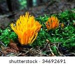 Mushrooms In Needles