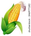 fresh corn on the cob... | Shutterstock .eps vector #346977182